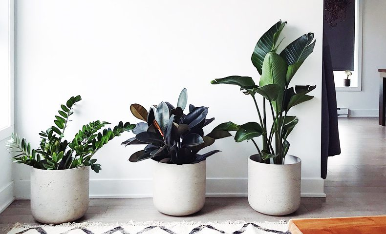 best-air-purifying-plants-for-home-office-wellbeing
